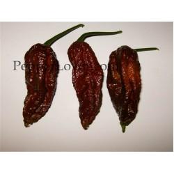 Bhut Jolokia chocolate, brown