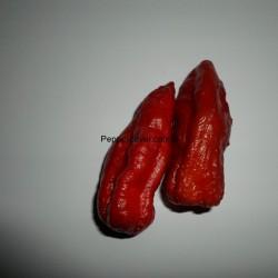 Caramel Fatalii (PL)