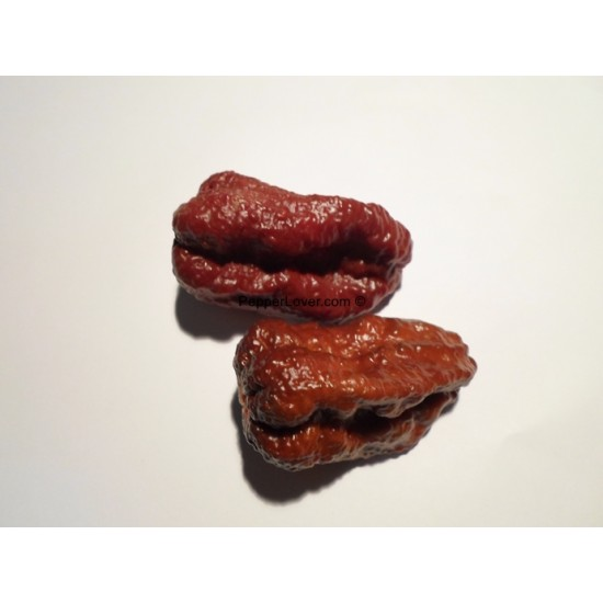 Caramel Naga morich (PL)