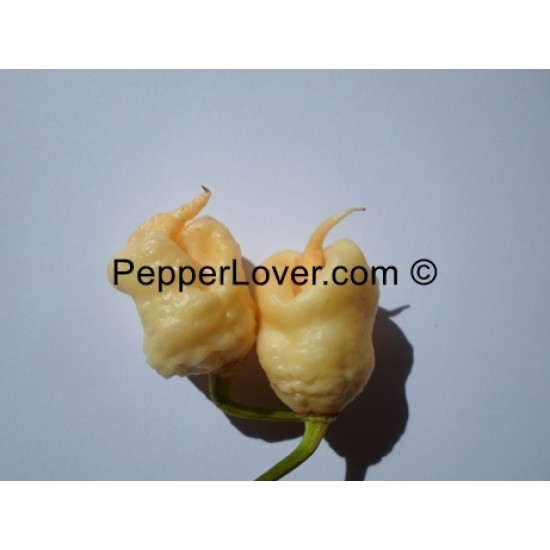Carolina Reaper Peach