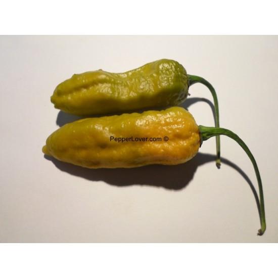 Green Bih Jolokia (PL)