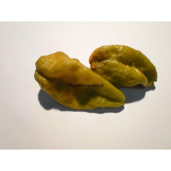 Green Naga (PL)