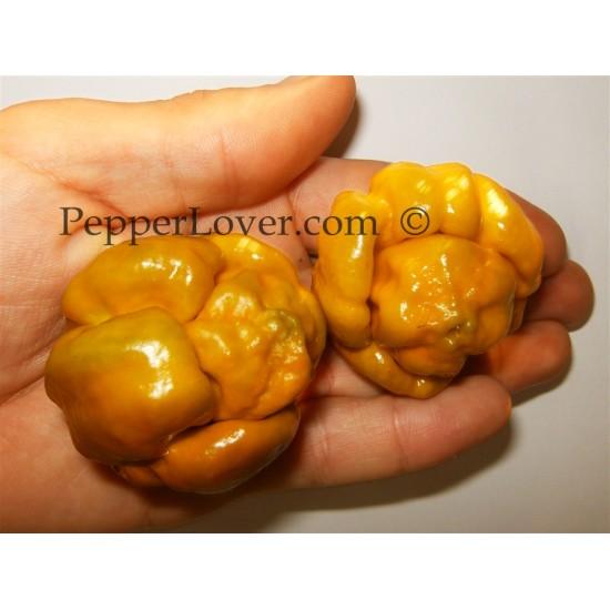 Mustard Moruga Scorpion (PL)