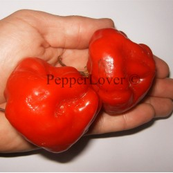 Stuffing Scotch Bonnet (PL)
