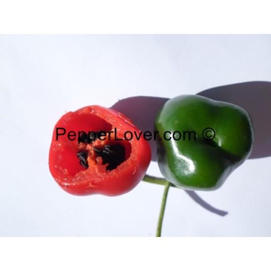 Desert Red Apple (PL)