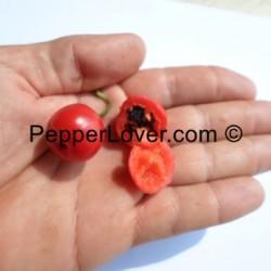 Desert Red Cherry (PL)