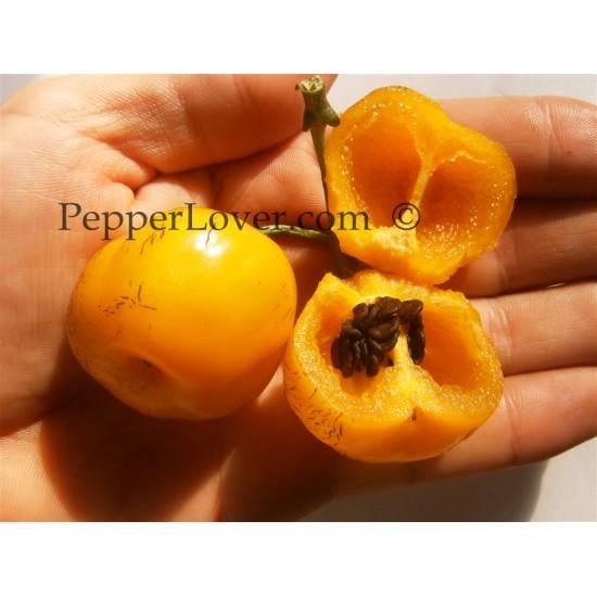 Manzano Amarillo