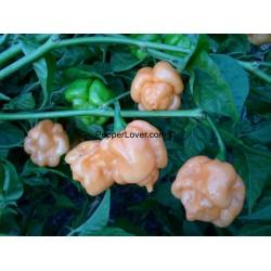 Mango Scorpion