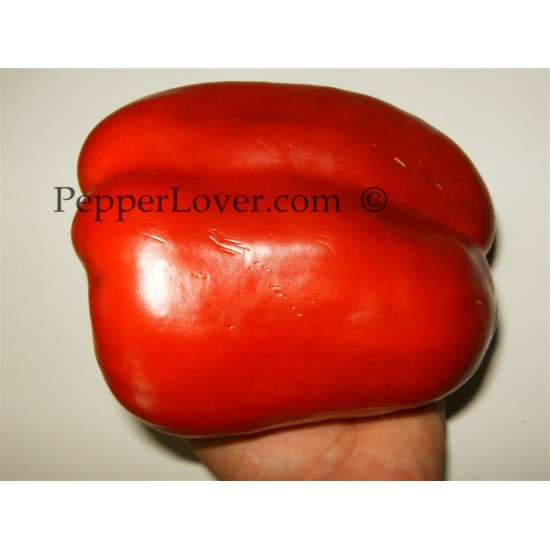 Giant Red Stuffed