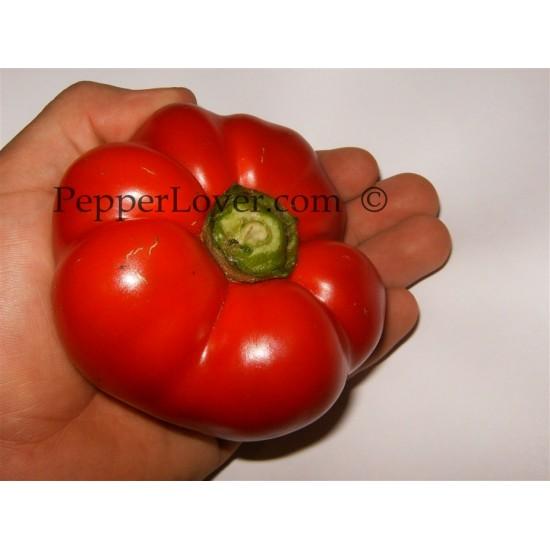 Tomato Pepper