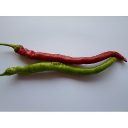 Turkish Cayenne