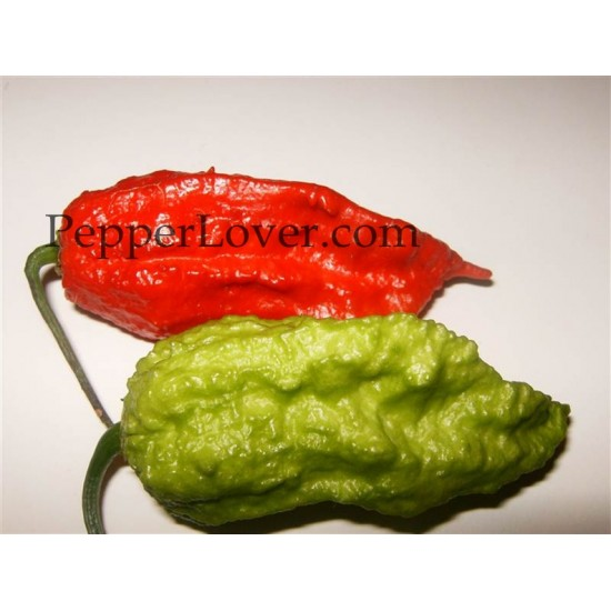 Bhut Jolokia Indian carbon