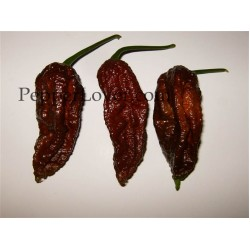 Bhut Jolokia chocolate, brown