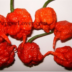 Carolina Reaper (Original Strain Red)