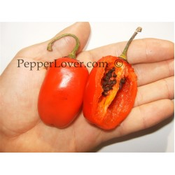 Andes Red Rocoto