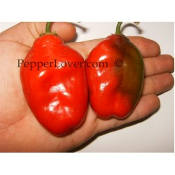 Costa Rican Red Rocoto