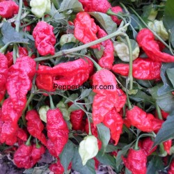 Monster Red Naga