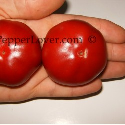 Hot Tomatoes